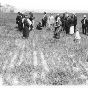 Walter and J.E. Wood, Oat Field, Currituck County farm tour