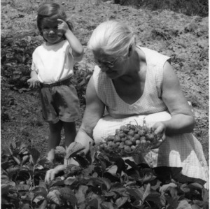 Denise Mahlon helping her grandmother, Mrs. Noah Whitehead, pick strawberries