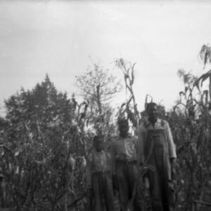 Three Men in a Cornfield