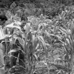 Head of Agronomy Visscher and Dr. Hopp, Cuban Yellow Dent Corn, Peru