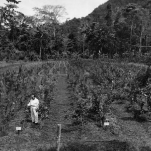 Ing[°] Garayar Examining Orange Plant, Citrus Nursery, Peru