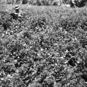 Potato Project in San Salvador