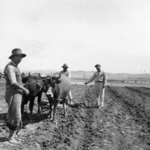 Plowing the Soil