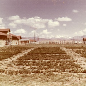Agricultural Mission to Peru