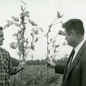 Nematode Prevention, 1969