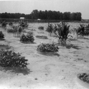 Central Crops Research Station, Nematode Microplots
