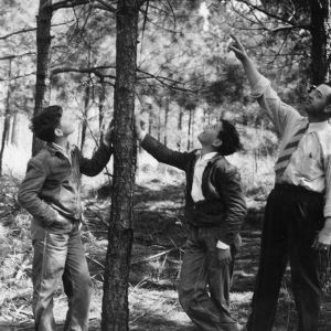 Assistant County Agent C.M. Jackson points out to 4-H Club members, Donald and Eugene Carlyle, the need for pruning in their timber thinning project