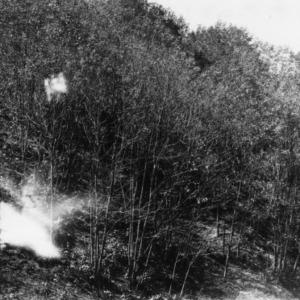Black locust reclaiming eroded pasture land