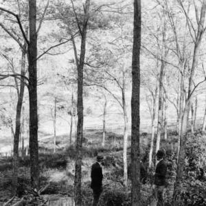 Black locust grove, holding soil and enriching pasture