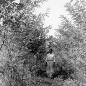 Black locust planted by Josiah Suggs, Greene County