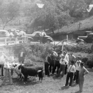 Abel Brothers showing their 4-H beef calves during the Haywood County Farm Tour, 1938