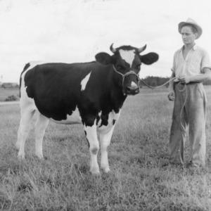 Heifer -  State College Dairy Farm.  Sept. 1941