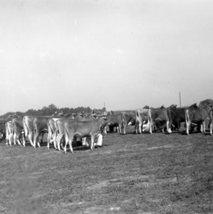 4-H Jersey Show,  1938 State Fair