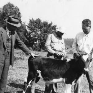 Bull calf from Quail Roost Farm