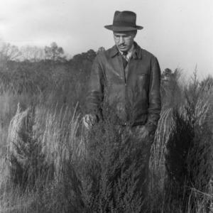 County Agent J. C. Powell examining cedar plantings