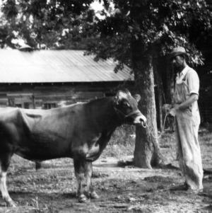 Bull on farm of D. A. Bruton