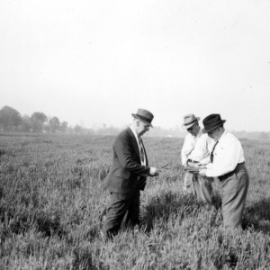 Dairymen examining vetch and oats