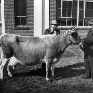 Agriculture professors inspecting livestock on State College Experiment Station farm