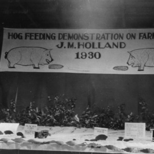 Hog-feeding demonstration exhibit at Warsaw Fair