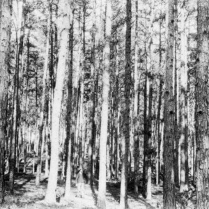 Man in forest of timber farming project