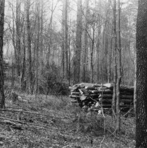 Firewood stacks in Hill Demonstration Forest