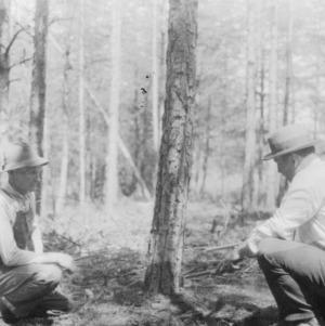 Men scattering brush away from trees
