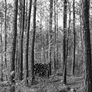 Small hardwoods left for windbreak