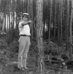 Thinning demonstration in Loblolly pine