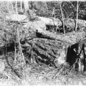 Woodland waste