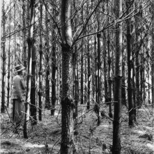 Biltmore Estate tree plot before thinning