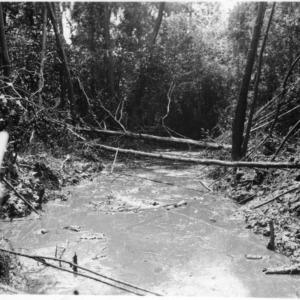 Ditch in Hofmann Forest