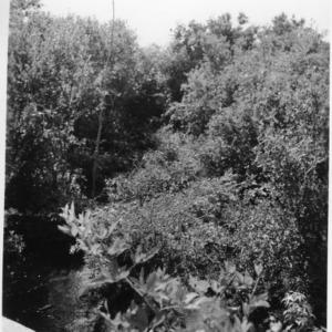 Cutting brush along the White Oak River