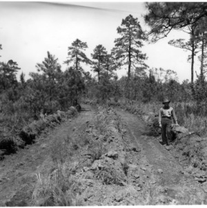 Area plowed of pond pine and reeds