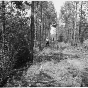 Men along tram road cleared with dynamite in Hofmann Forest