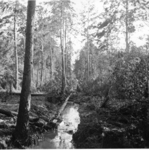 Ditch made with dynamite in Hofmann Forest