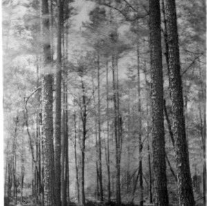 Timber stand after harvest