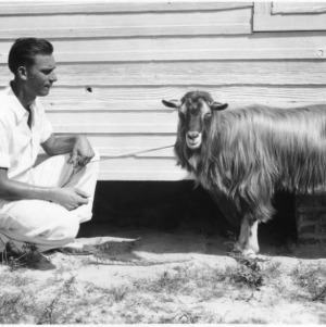 Man holding purebred billy goat of dairy breeding