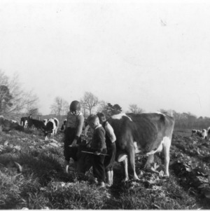 Boys with cows grazing in field