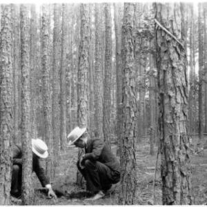 Men observing leaf litter accumulation in loblolly pine stand