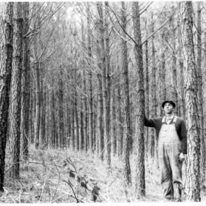 Man standing in loblolly pines