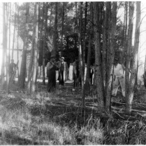 Farmers taking lesson in thinning loblolly pines