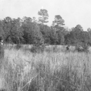 B.L. Sykers inspecting a 4-acre broom straw field which he has recently set out in Loblolly pines.
