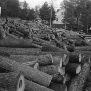 Log Yard - Farm Forestry