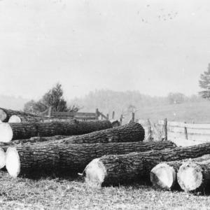 White pine logs