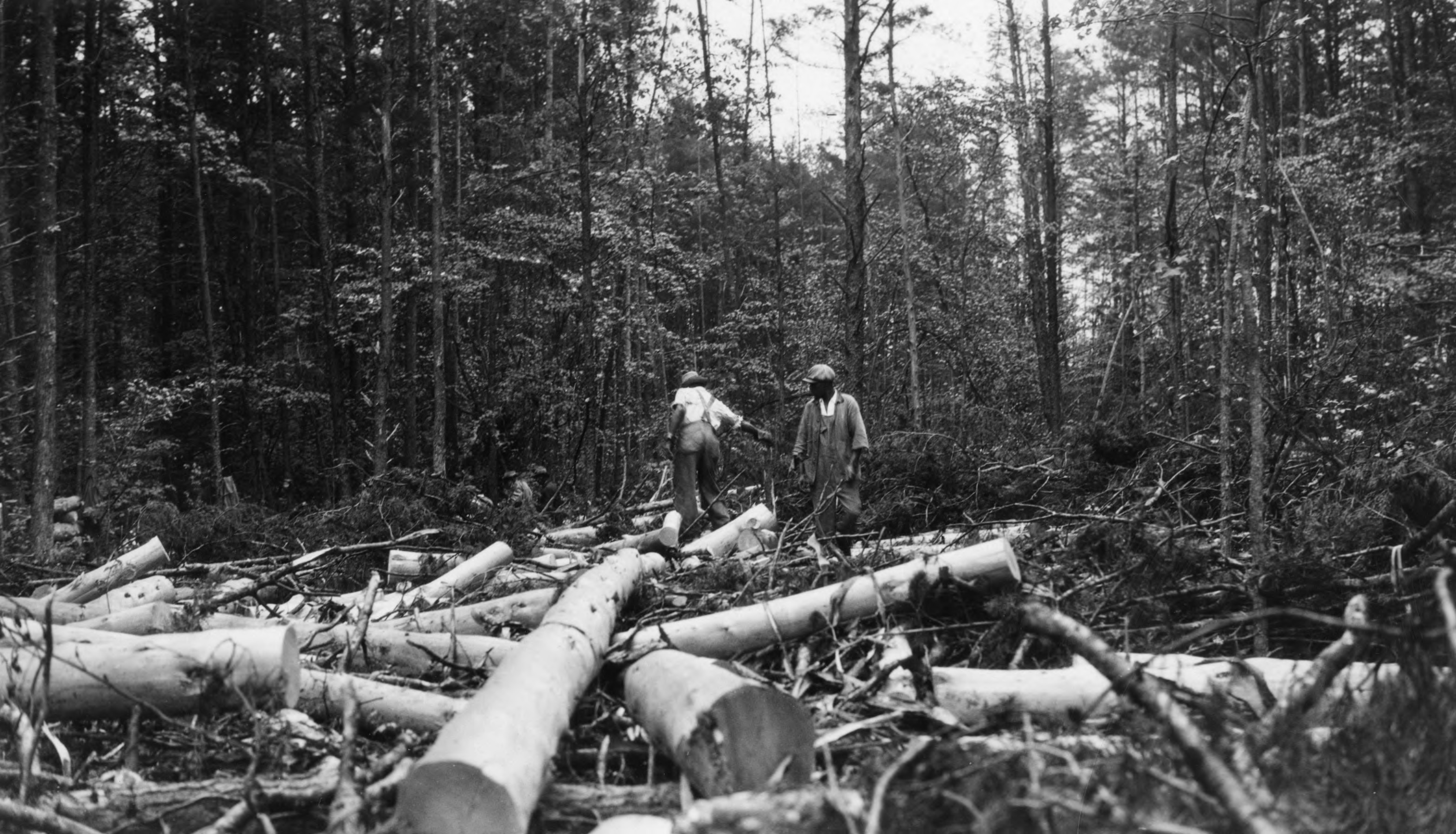 Lumbering operations in the George Watts Hill Demonstration Forest (G