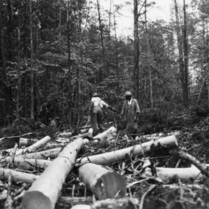 Lumbering operations in the George Watts Hill Demonstration Forest