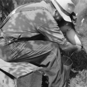 "Charlie German milking cow with ""shade tree"" method"