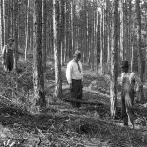 Hillside reclaimed by pines