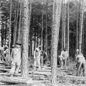 African American farmers learning methods of timber farming