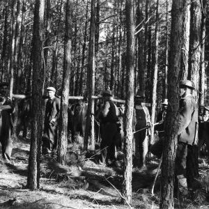 Agent Howard M. Singletary and African American farmers conducting timber thinning demonstration